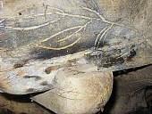 2)Le decorazioni del carro antico